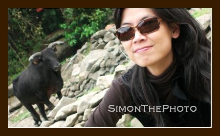 Xandra & Cow
